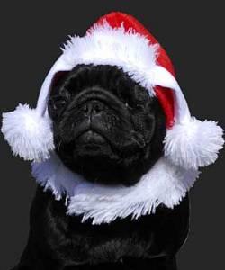 bonnet noel chien Bonde noël pour chien An0108 bonnet noel chien