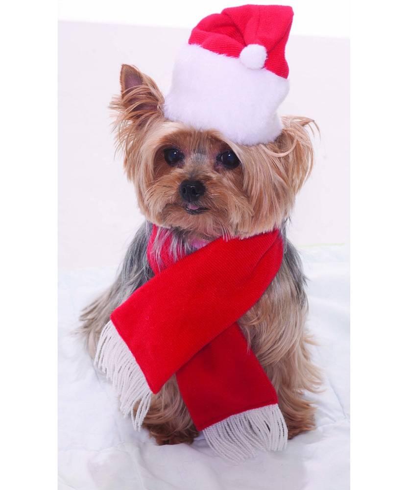 Bonnet Noël chien - chat