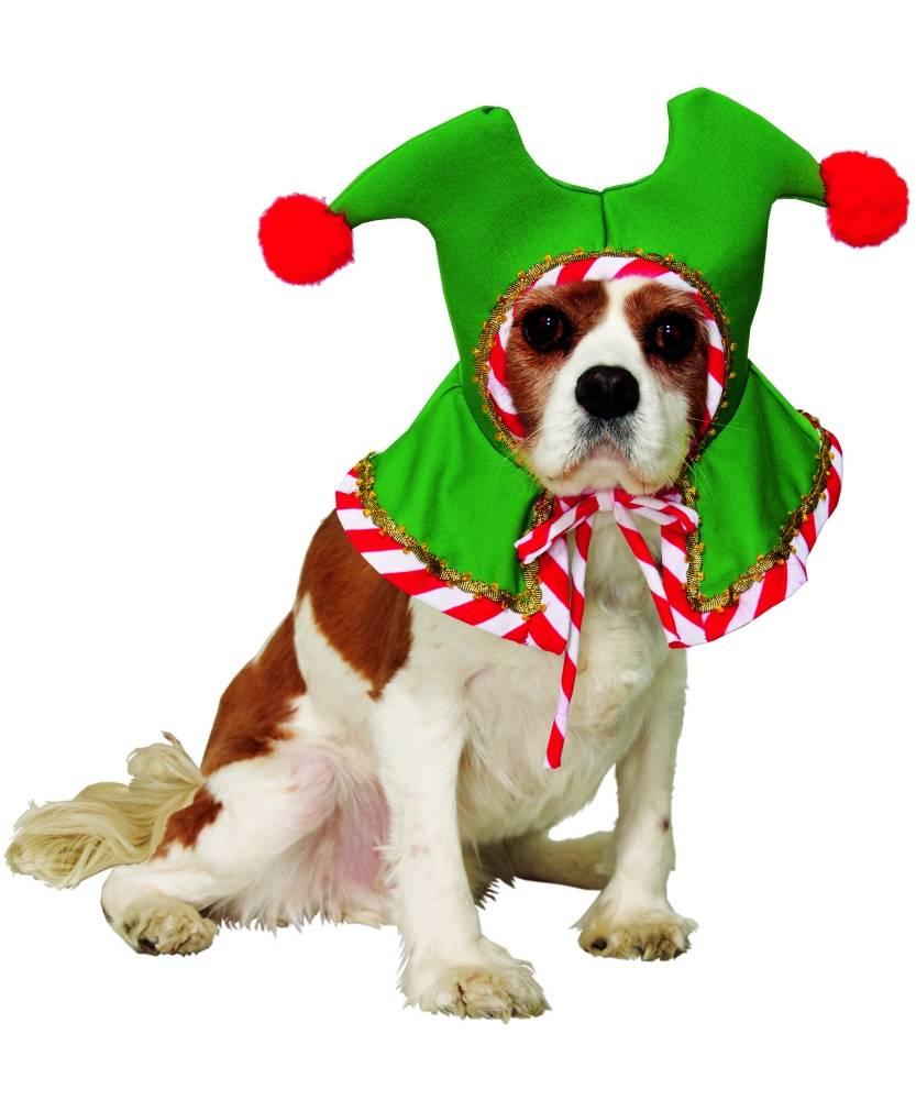 Bonnet-de-Noël-chien-ou-chat