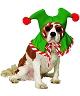 Bonnet-de-Noël-chien