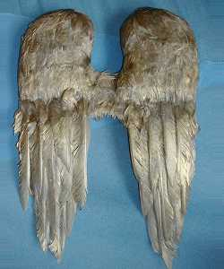 Ailes-plumes-Or