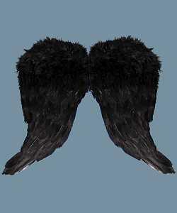 Ailes-plumes-Noires