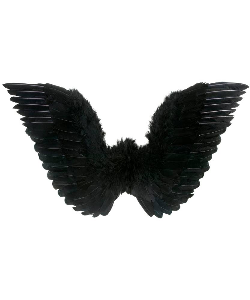 Ailes-en-plumes-noires