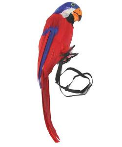 Faux-perroquet