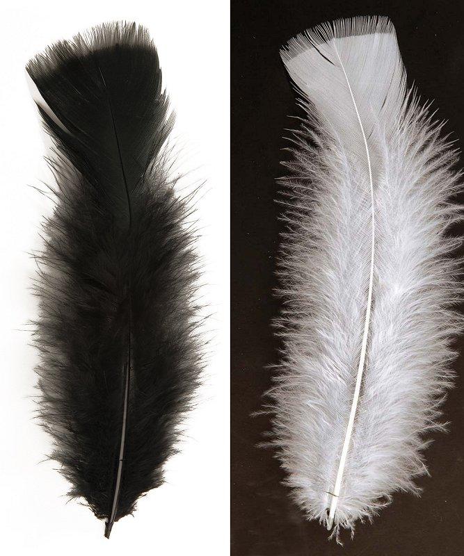 Plumes-décoratives-Lot-de-50-plumes-10cm-2