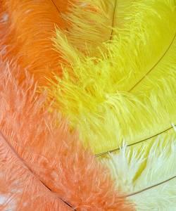 Plume-Autruche-Jaune-Orange-30-40cm-2