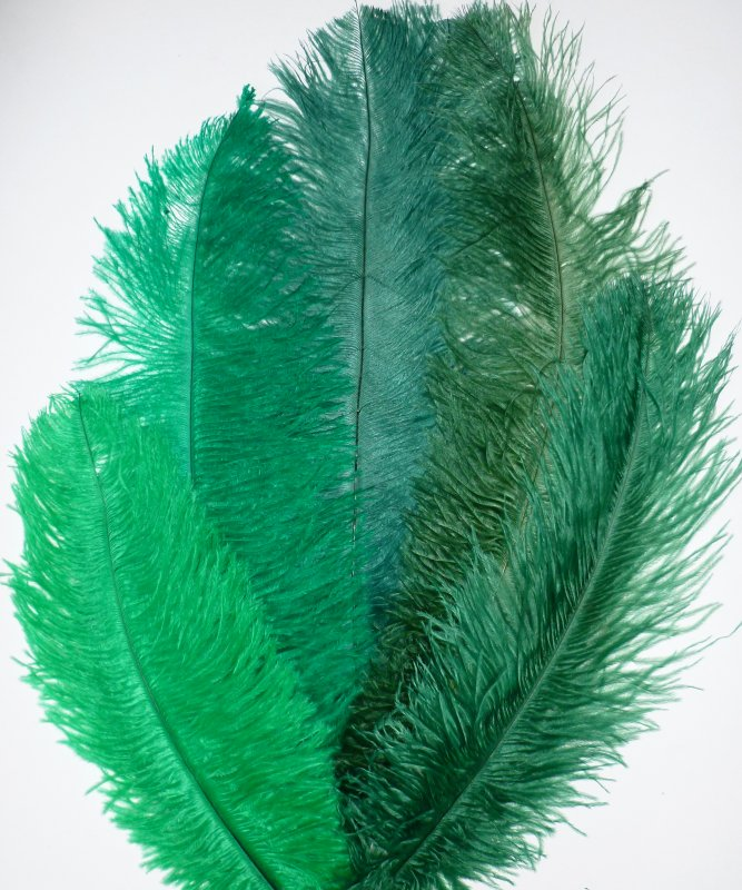 Plume-Autruche-Verte-30-40cm