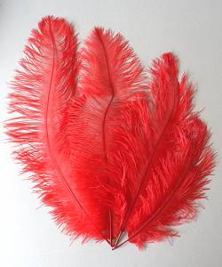 Lot-plumes-choix-2