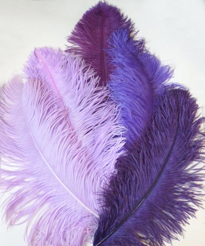 Plume-Violette-50-60cm