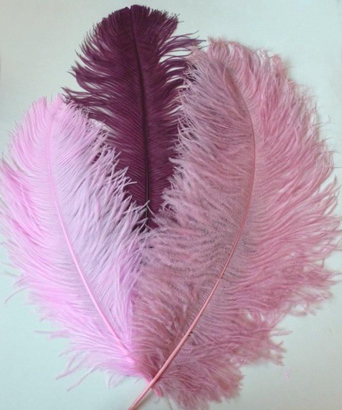 Plume-Autruche-Rose-50-60cm