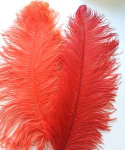 Plume-autruche-Rouge-50-60cm