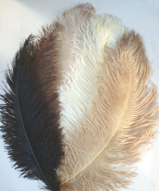 Plume-Autruche-50-60