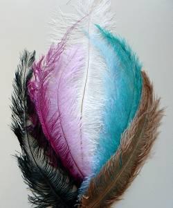 Lot-de-50-plumes-Autruche-20-40-cm