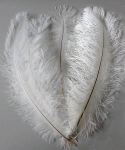 Lot-de-25-plumes-Autruches-20-40cm-blanches