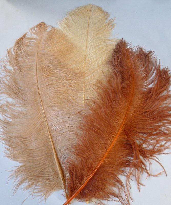 Plume-Autruche-s�rie-50-60cm