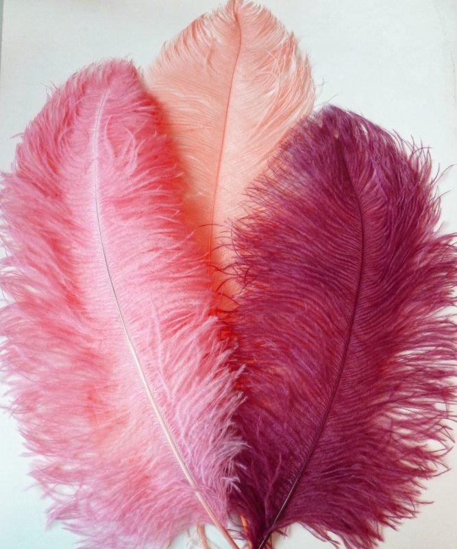 Plume-Autruche-Rose-Corail-50-60cm