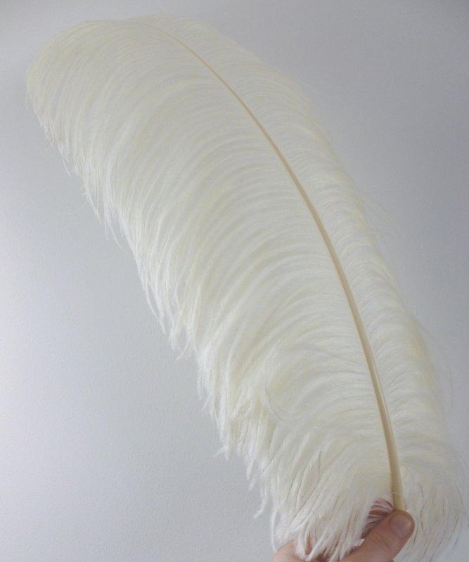 Plume-Autruche-Ecru-LUXE-50-60cm