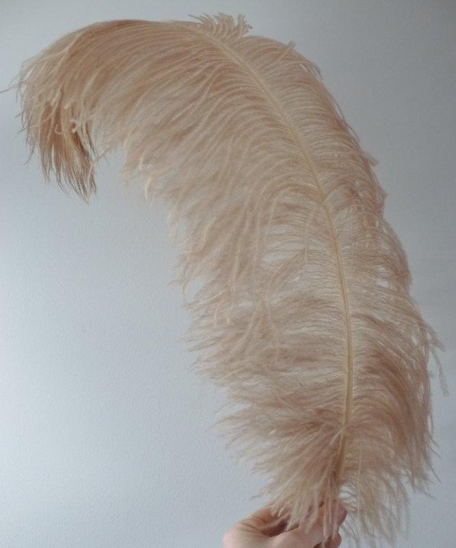 Plume-Autruche-Nougat-LUXE-50-60cm