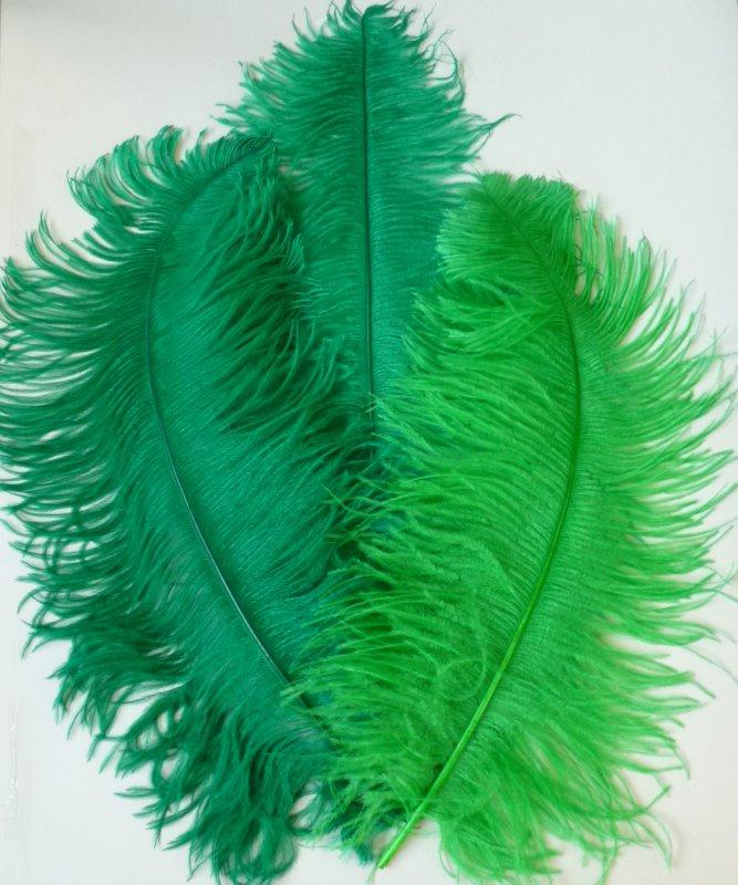 Plume-Autruche-Verte-50-60cm