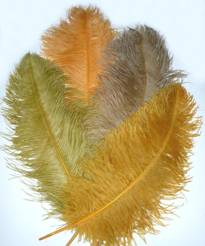 Plume-Autruche-50-60cm