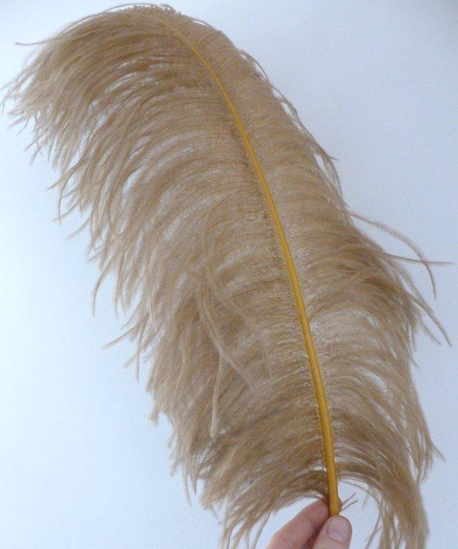 Plume-Autruche-Bronze-LUXE-50-60cm