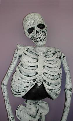 Squelette-150cm-2
