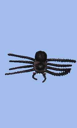 Araignée-10cm