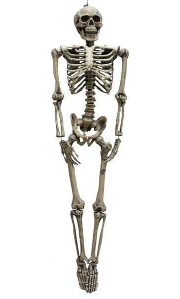 Squelette-160cm