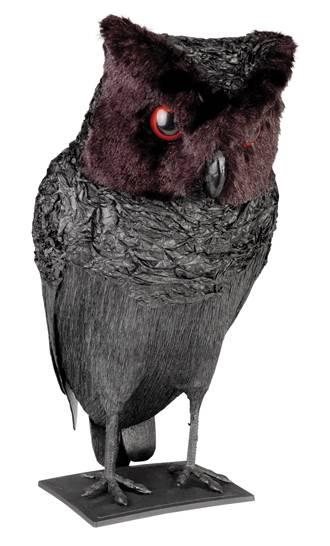 Chouette-noire-M1