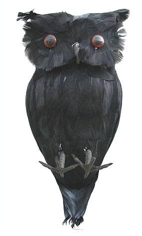 Décoration-Hibou-noir