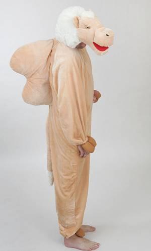 Costume-de-chameau